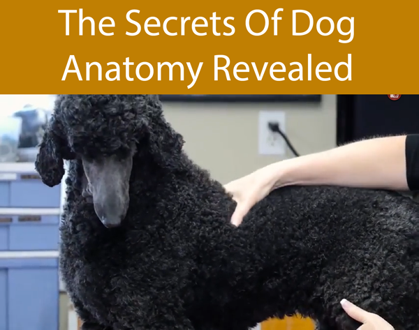 The Secrets Of Dog Anatomy Revealed