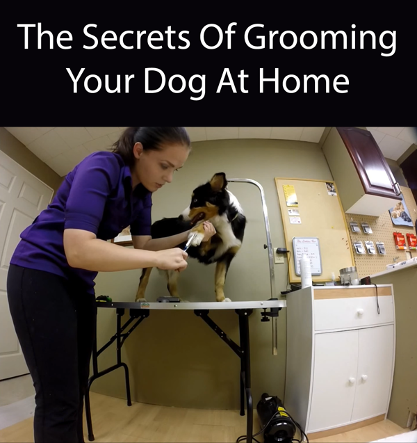 The Secrets Of Grooming Your Dog At Home