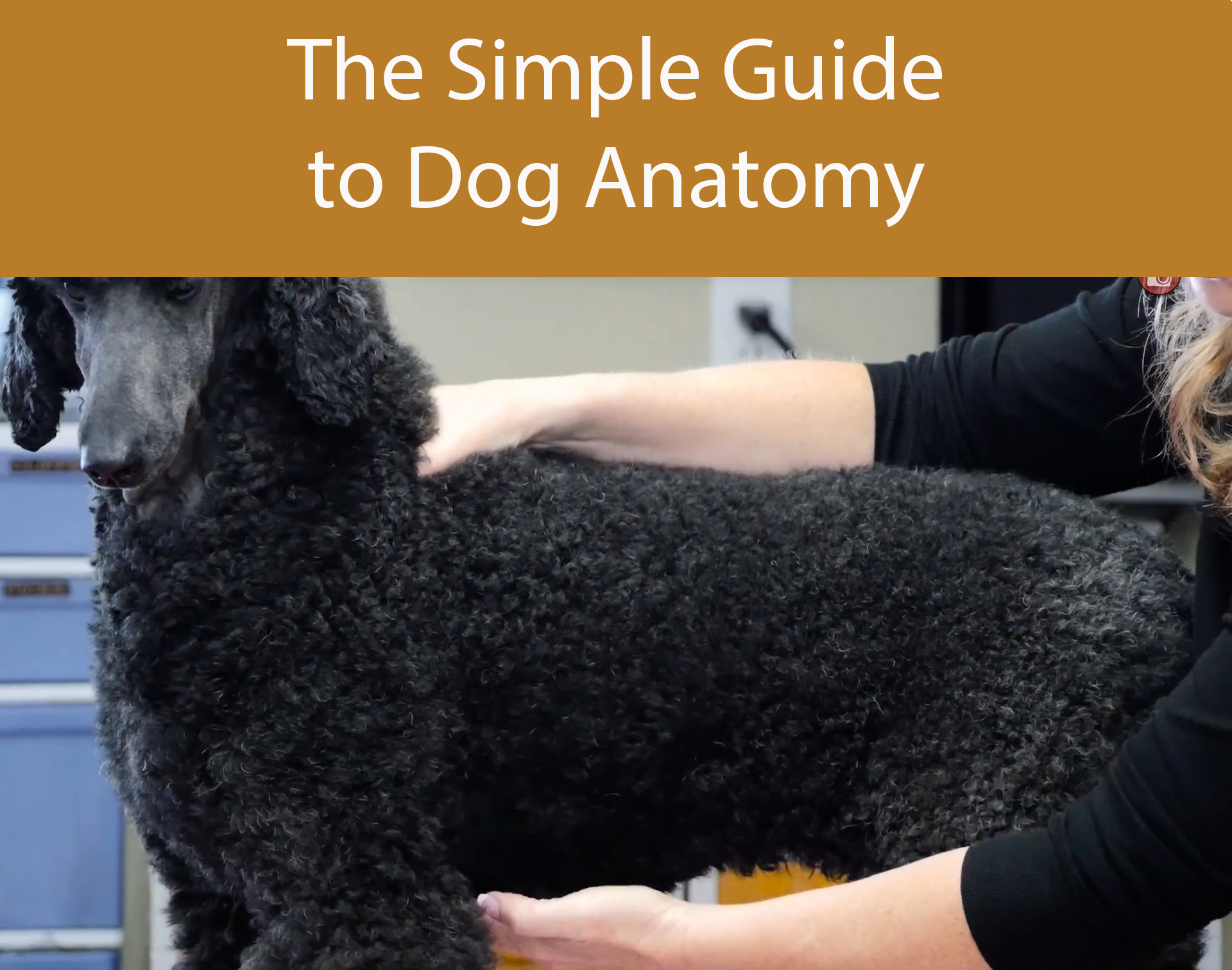 The Simple Guide to Dog Anatomy