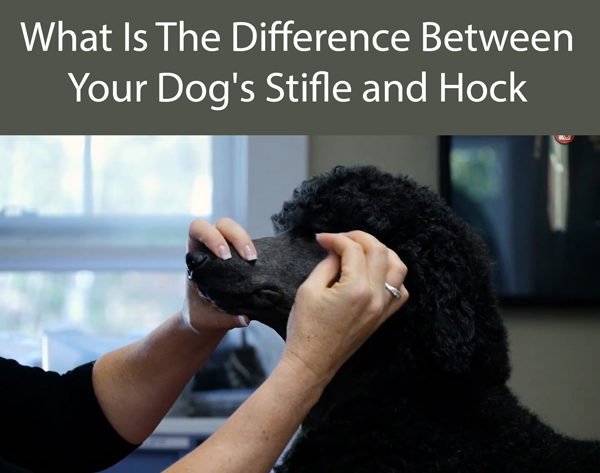 What Is The Difference Between Your Dog's Stifle and Hock