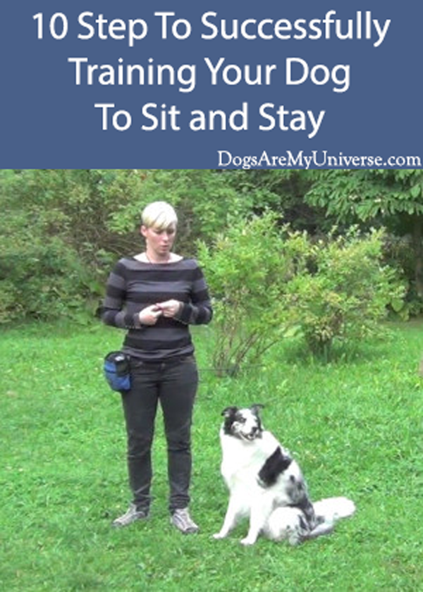 10 Step To Successfully Training Your Dog To Sit and Stay