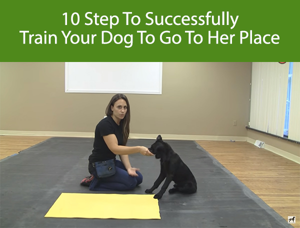 10 Step To Successfully Train Your Dog To Go To Their Place