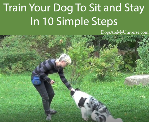 Train Your Dog To Sit and Stay In 10 Simple Steps