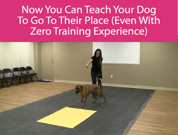 Now You Can Teach Your Dog To Go To Their Place (Even With Zero Training Experience)