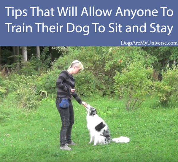 Tips That Will Allow Anyone To Train Their Dog To Sit and Stay