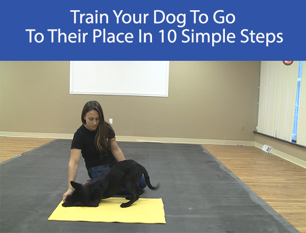 Train Your Dog To Go To Their Place In 10 Simple Steps