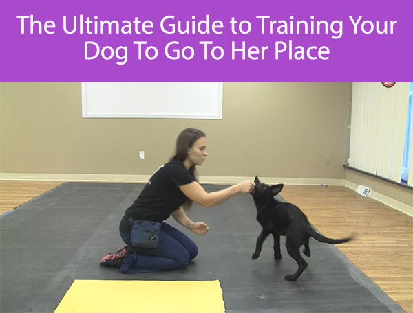 The Ultimate Guide to Training Your Dog To Go To Their Place