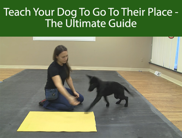 Teach Your Dog To Go To Their Place - The Ultimate Guide