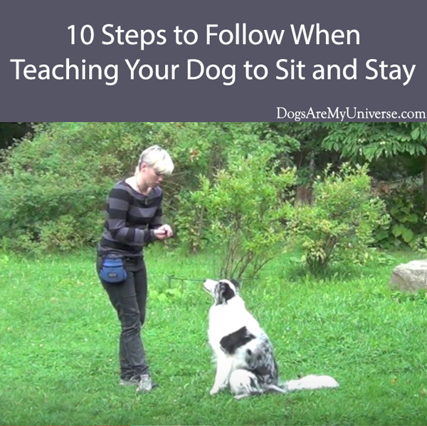 10 Steps to Follow When Teaching Your Dog to Sit and Stay