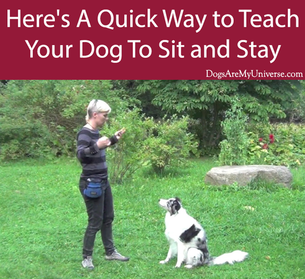 Here's A Quick Way to Teach Your Dog To Sit and Stay