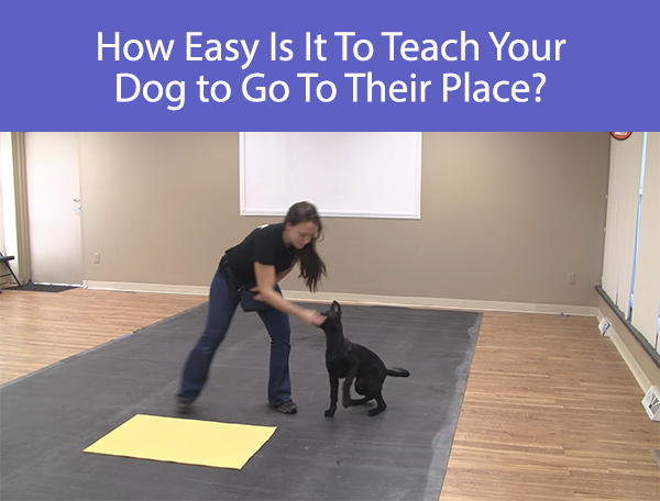 How Easy Is It To Teach Your Dog to Go To Their Place