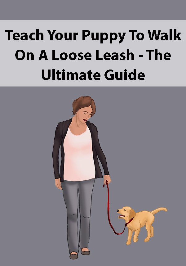 Teach Your Puppy To Walk On A Loose Leash - The Ultimate Guide
