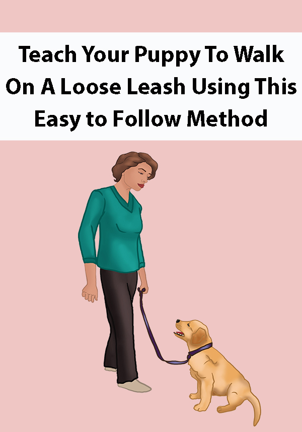Teach Your Puppy To Walk On A Loose Leash Using This Easy to Follow Method