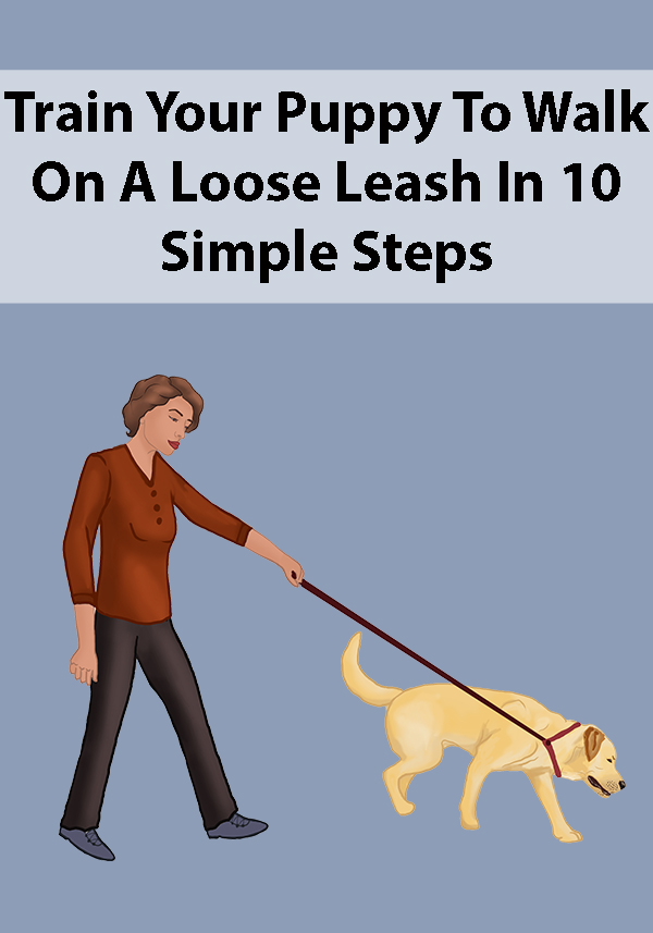 Train Your Puppy To Walk On A Loose Leash In 10 Simple Steps