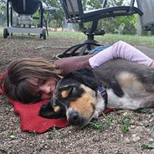 Do Dogs Like Hugs