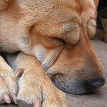 Dog Sleeping Habits