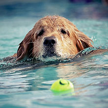 Easy Ways To Exercise Your Dog