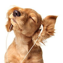 Do Dogs Like Music
