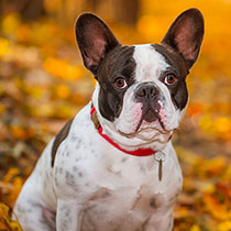 Things To Do With Your Dog This Fall