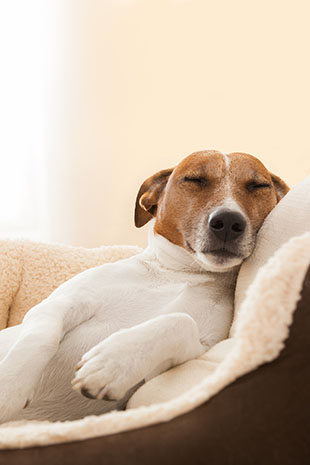 Why Do Dogs Move Their Legs When They Sleep