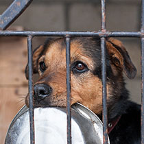 Why Dogs End Up In Shelters