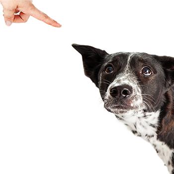 Scolding A Dog