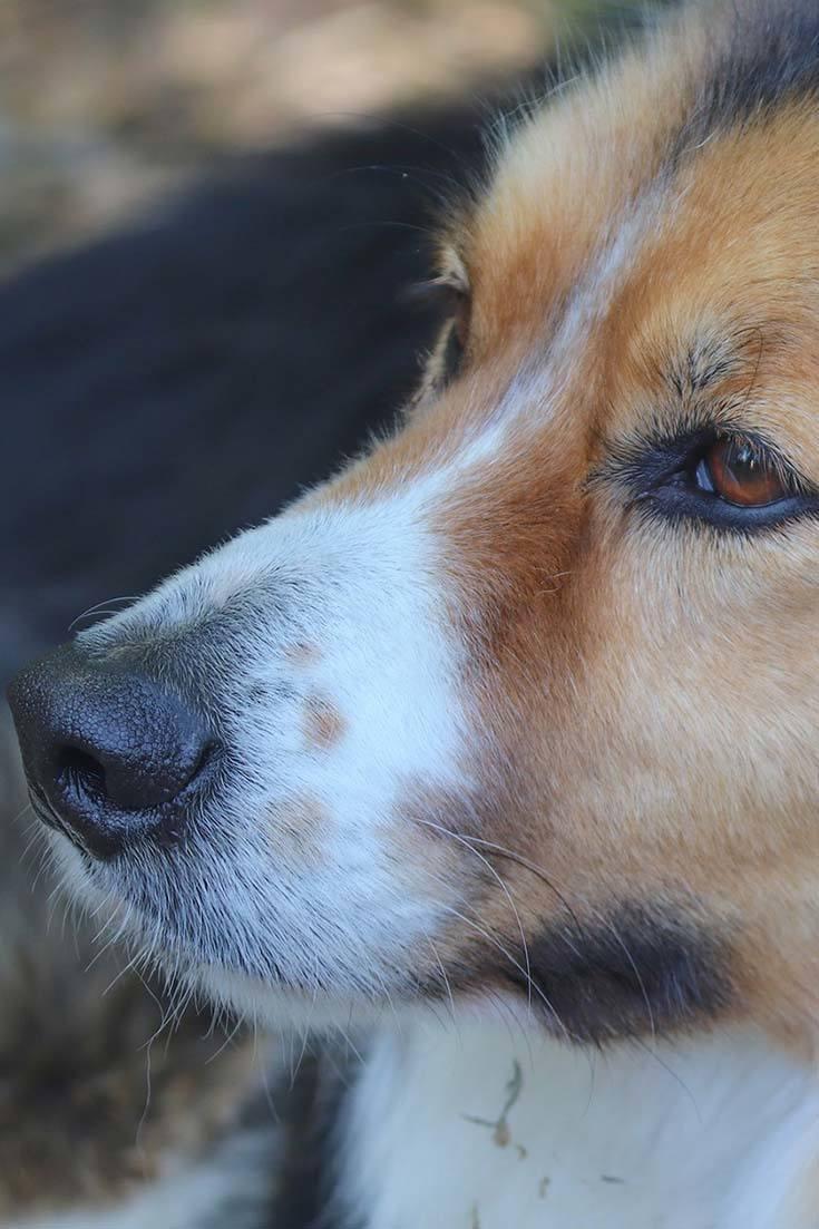 Are Dogs Self-aware?